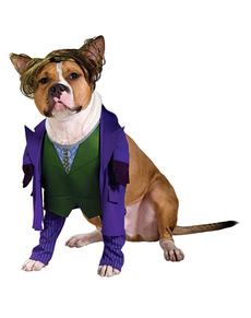 Fato de Joker de Batman TDK para cão
